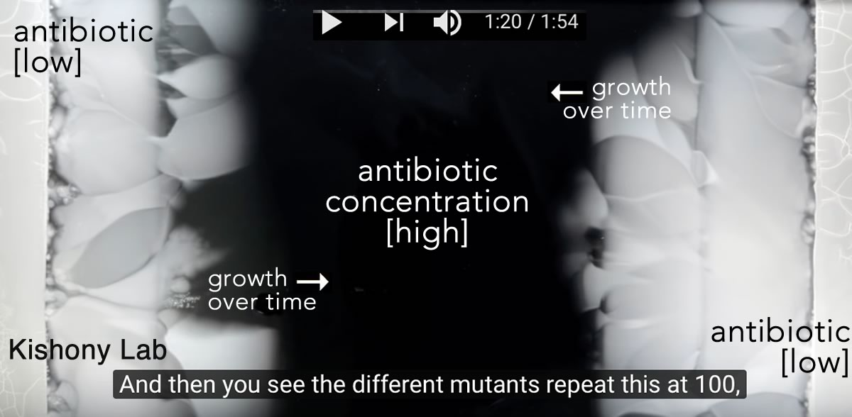 bacterial evolution-antibiotic resistancepng