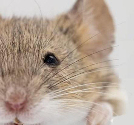 Mice (and humans) in a maze: a useful parable for scienceeducation?